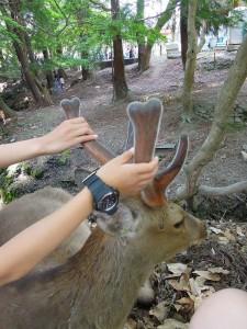 奈良 鹿の角