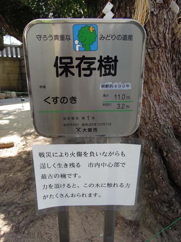 難波神社 楠木2
