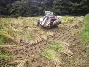 お米収穫の秋