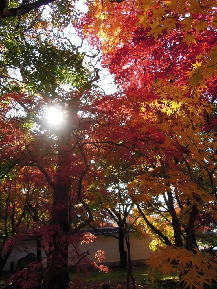 2014 南禅寺の紅葉