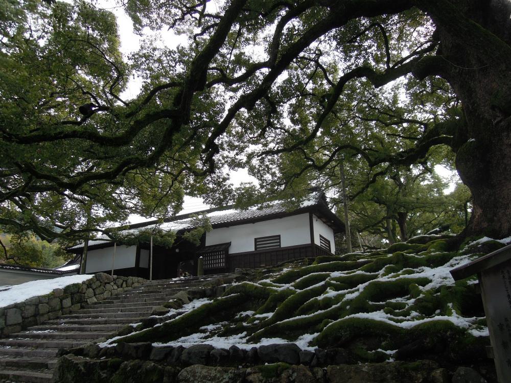 天台宗 青蓮院門跡 京都市天然記念物大クスノキ