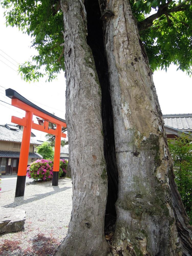 比叡山お膝元 坂本 大神門神社