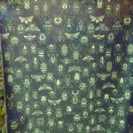 全正絹 西陣織 金襴 Insect 虫紋様3